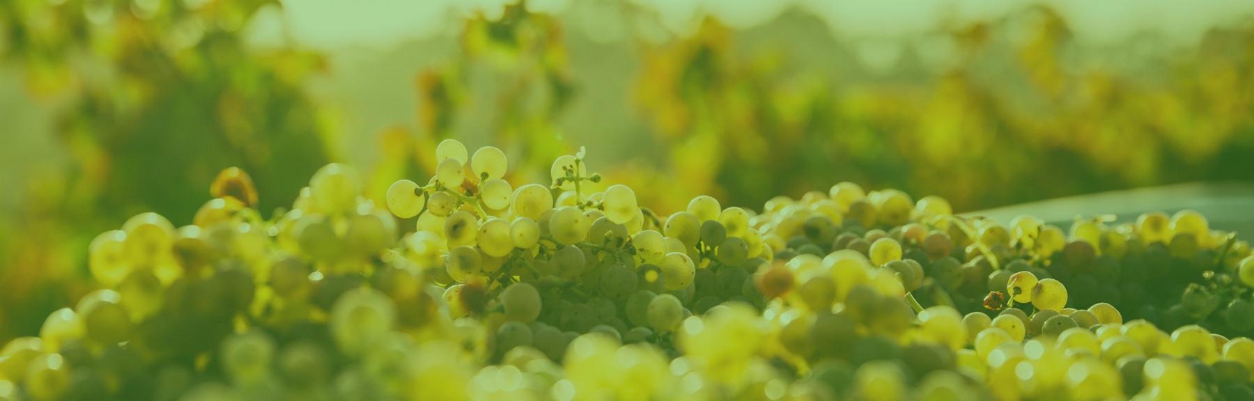 Slider - Bàckai - I nostri vini - Vigneti Bonaventura